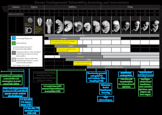 Fetal Dev 6